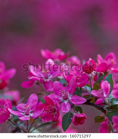 twig with blooming pink flowers on a pink background blurred - stock photo