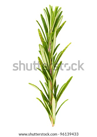 Twigs of rosemary isolated on a white background - stock photo