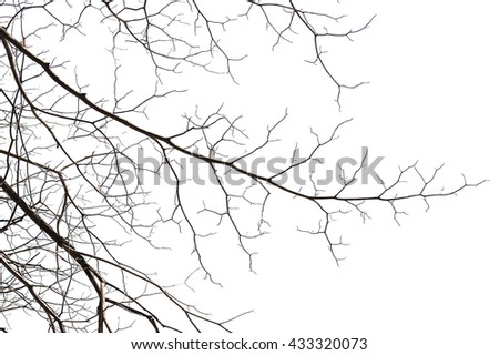 Twigs on white background, Abstract tree branch - stock photo