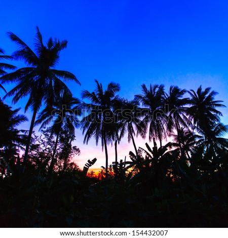 twilight of coconut tree - stock photo