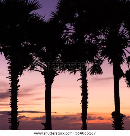 twilight silhouette of sugar palm tree - stock photo