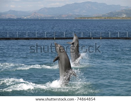 twin dolphin show in subic city, philippines - stock photo