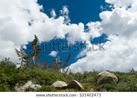 Twisted trees on a high mountain ridge in Colorado - stock photo