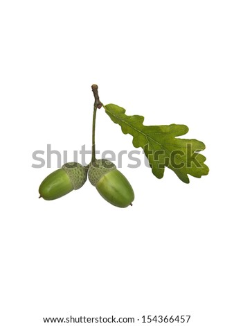 Two acorns and a leaf - stock photo