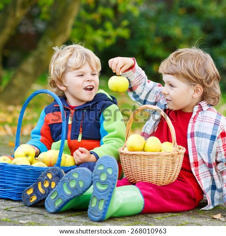 Two adorable boy friends eating apples in home's garden, outdoors. Own harvest. Boys in colorful rubber boots on autumn day. - stock photo