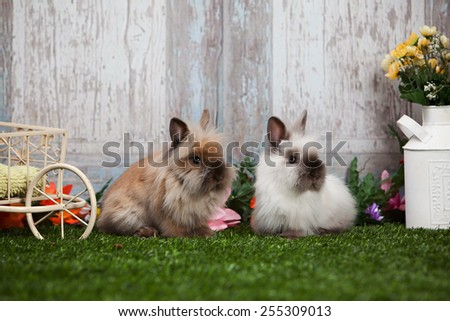 Two adorable bunnies sitting in the grass by a rustic, blue door. - stock photo