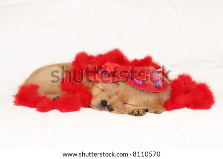two adorable golden retriever puppies with red hats and red boa - stock photo