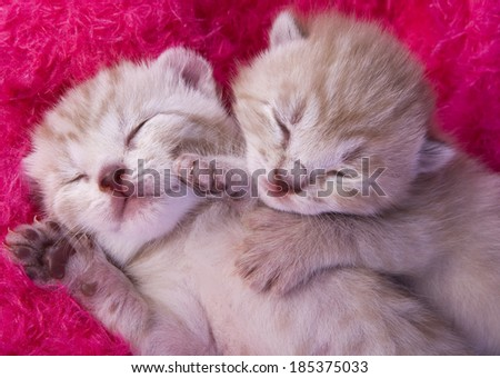 Two adorable kittens lying asleep on hot pink furry background - stock photo