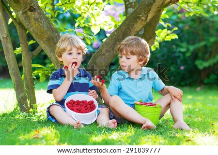 Two adorable little friends boys eating fresh organic raspberries from home's garden, outdoors. Healthy food and snack for kids in summer. - stock photo