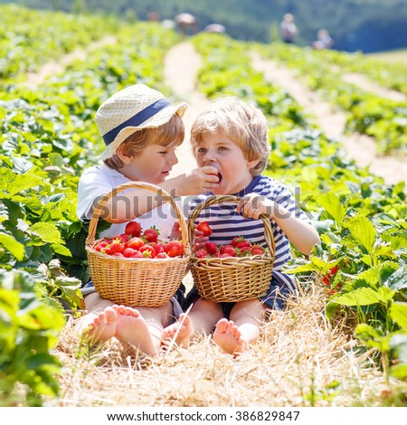 Two adorable little friends, kid boys having fun on strawberry farm in summer. Chidren eating healthy organic food, fresh berries. Happy twins. - stock photo