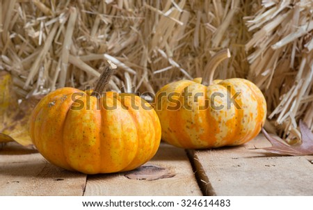 Two autumn gourds on wood planks with straw background - stock photo