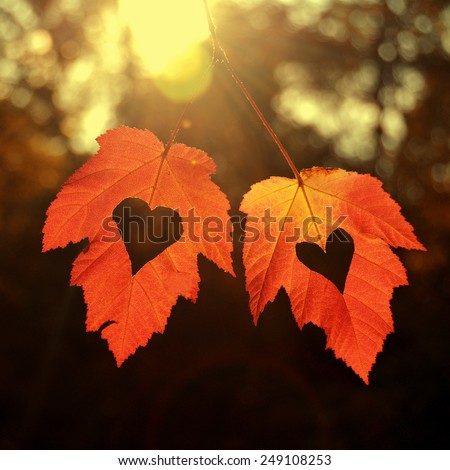 Two autumn leaves with heart - stock photo