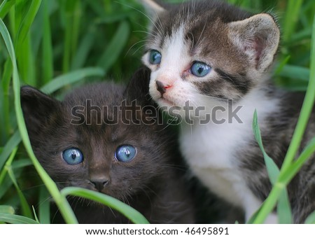 Two baby cats in the grass - stock photo