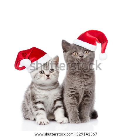 Two baby kittens in red santa hats looking up. isolated on white background - stock photo