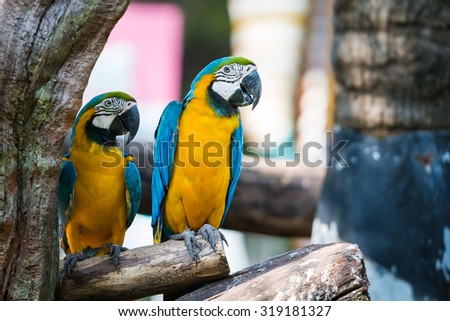 Two beautiful colorful macaw parrot sitting on a branch. a pair of birds on summer background. - stock photo