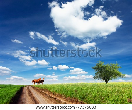 Two beautiful horses on a summer pasture - stock photo