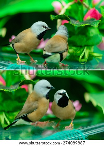 two beautiful little birds spring nature theme - stock photo