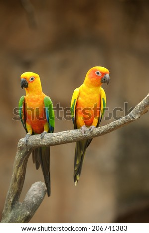 Two beautiful parrots sit on tree branch. - stock photo