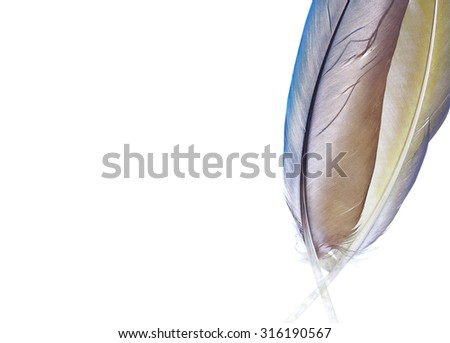 two beautiful pen feathers on a white background isolated - stock photo