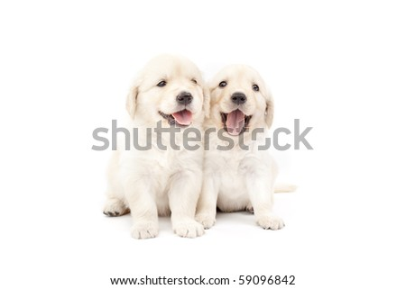 Two beautiful puppies - stock photo