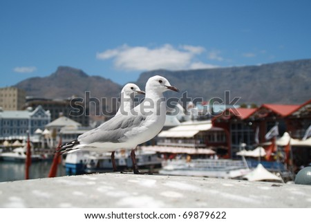 Two birds in the Victoria & Albert Waterfront Cape Town, South Africa - stock photo