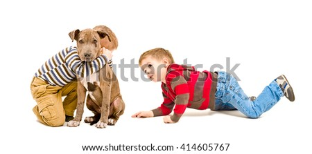 Two boys and a puppy pit bull  playing together isolated on white background - stock photo