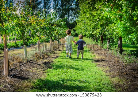 Two boys walking holding hands picking fruit in summertime  - stock photo