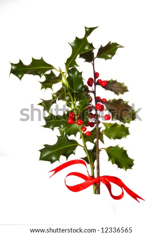 Two branches of real holly, with red berries, tied with a red ribbon and isolated on a white background - stock photo