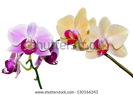 two branches of the orchid on white background - stock photo