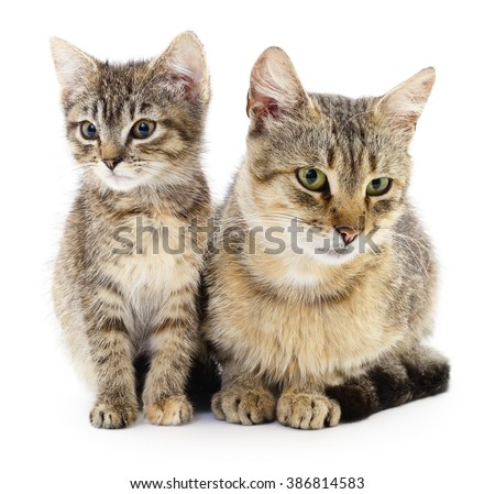 Two brown cats on a white background.  - stock photo