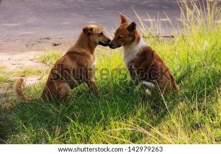 two brown sitting dogs kissing on the field near the road - stock photo