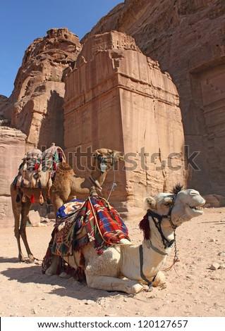 two camels near ancient ruins, Petra, Jordan - stock photo