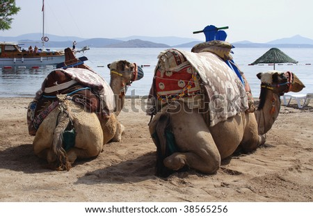 two cammels waiting for the tourist on a beach near Bodrum, Turkey - stock photo