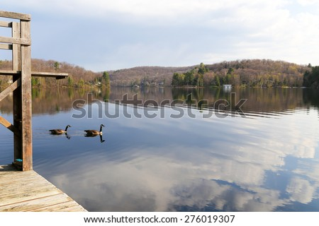 two Canadian Geese swim by the cottage dock on the Narrows at the cottage - stock photo