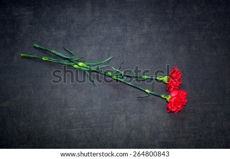 Two carnation flowers on a dark background - stock photo