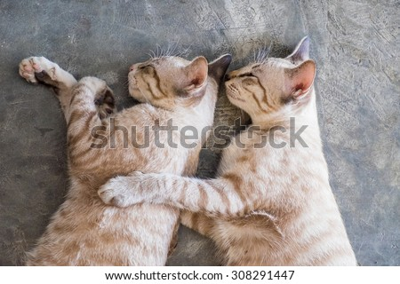 Two cat kitten brethren sleeping hug embrace - stock photo