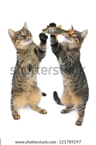 two cats are isolated on a white background - stock photo