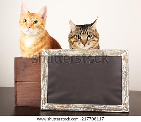 Two cats in wooden box and blackboard on table isolated on white - stock photo