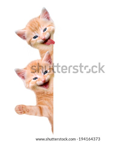Two cats, laughing and waving isolated on white background - stock photo