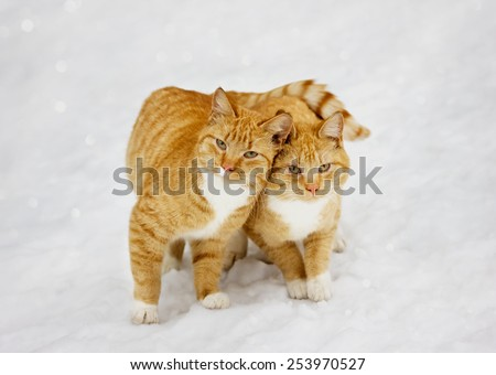 two cats nestled to each other outdoor in snowy background - stock photo
