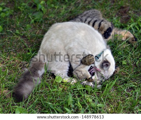 Two cats play fighting in the grass, the tabby appears to be yelling for help. - stock photo