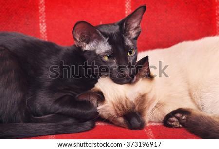 Two Cats Portrait - stock photo