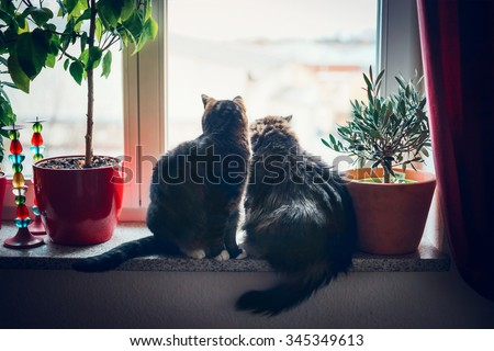 Two cats sits on window sill and looking outside in home furnishings - stock photo