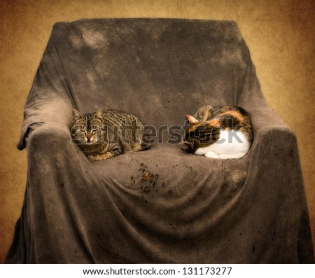 Two cats sleep in the old armchair - stock photo