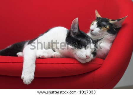 Two cats sleeping on a red chair - stock photo