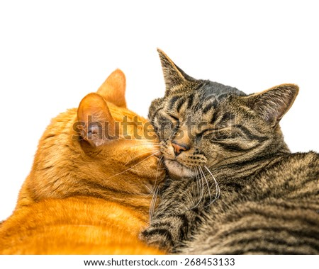 Two cats sleeping together. Isolated on white background. - stock photo