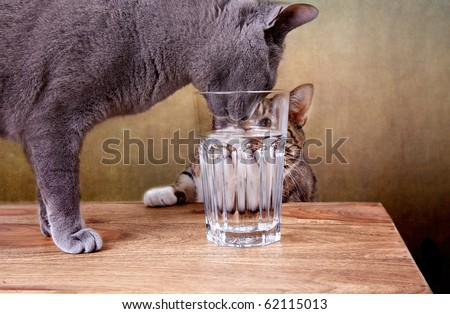 Two cats with glass of water studio shot - stock photo