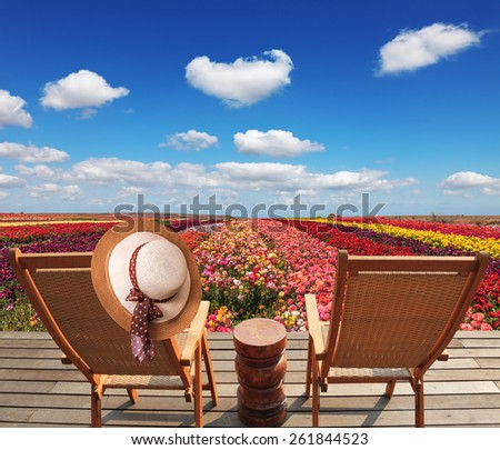 Two chaise lounges for rest stand on a scaffold at a picturesque flower field. On one chaise lounge the elegant straw hat hangs. Spring buttercups grow multi-colored strips - stock photo