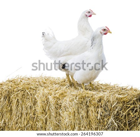 Two chickens on bale of stray - stock photo