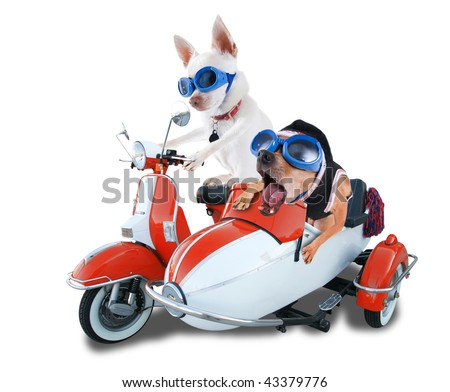 two chihuahuas in a scooter and sidecar - stock photo